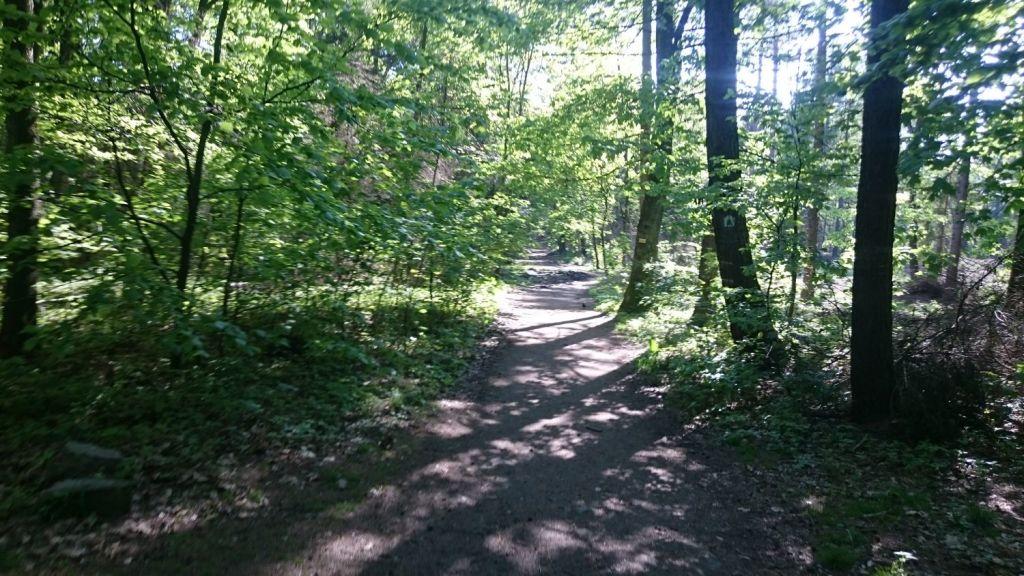 biegnasleze-trasa-2017-24